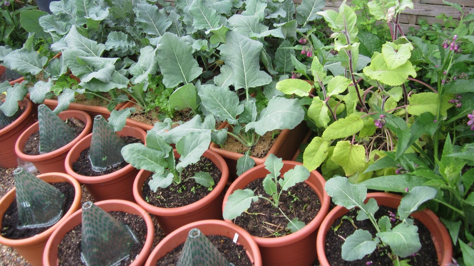 gemüseanbau auf balkon oder terrasse - veganes körpergefühl, Gartengerate ideen